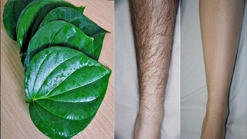 wax lông chân