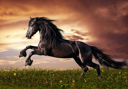 hình xăm con ngựa